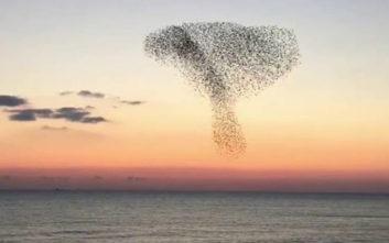 Ο ιδιαίτερος χορός των πουλιών πάνω από τη θάλασσα