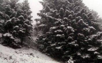 Φρέσκο χιόνι στα ορεινά της Ευρυτανίας που ντύθηκαν στα λευκά