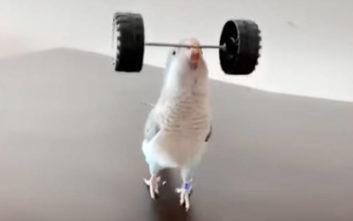 Παπαγάλοι με απίστευτες δεξιότητες