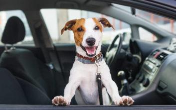 Εξουδετερώστε τις δυσάρεστες οσμές από το εσωτερικό του αυτοκινήτου