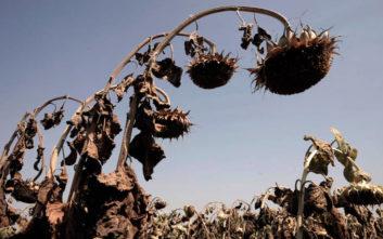 Η ξηρασία απειλεί την Ευρώπη