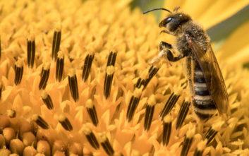 Το μικρότερο McDonald's στον κόσμο βρίσκεται στην Σουηδία και οι...πελάτες είναι μέλισσες