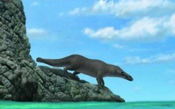 Πριν από 42,6 εκατ. χρόνια υπήρχε μια φάλαινα λίγο διαφορετική από αυτή που ξέρουμε