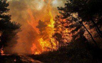 Η πρόταση δασολόγου για τη μείξη των δασών