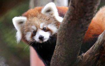 Η Πέγκυ και η πρωτιά της στον ζωολογικό κήπο της Ρουμανίας