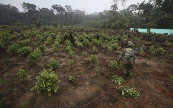 Κολομβία: Κατασχέθηκαν 95 τόνοι κοκαΐνης σε 105 μέρες