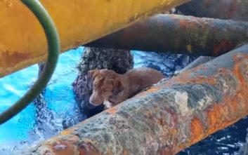 Σκύλος - survivor βρέθηκε 220 χιλιόμετρα μακριά από την ακτή