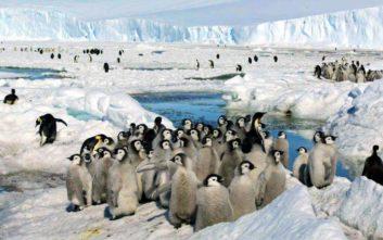Η μαζική εξαφάνιση των πιγκουίνων σε αποικία της Ανταρκτικής