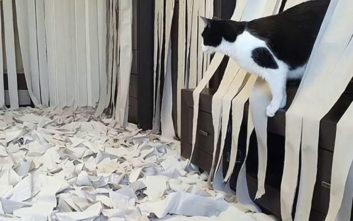 Πώς αντιδρά μια γάτα σε ένα σπίτι γεμάτο με χαρτιά υγείας