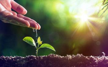 Επιστήμονες με επικεφαλής Ελληνίδα «πείραξαν» τα φυτά για να μεγαλώνουν πιο γρήγορα