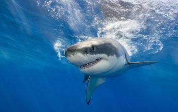 Από τόσο μακριά μπορεί να εντοπίσει το αίμα ο καρχαρίας