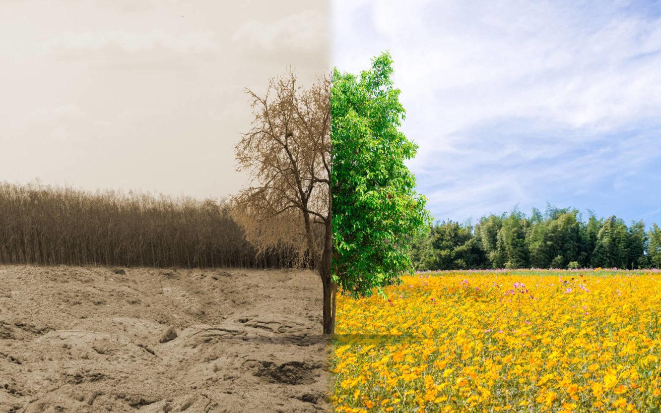 Οι πέντε «πράσινες» χώρες που σώζουν τον πλανήτη