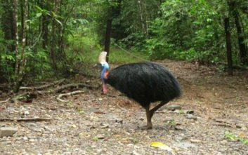 Σε δημοπρασία το «πιο επικίνδυνο πουλί στον κόσμο» που σκότωσε το αφεντικό του