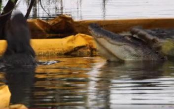 Αλιγάτορας έστησε ενέδρα σε άλλον αλιγάτορα και του επιτέθηκε ύπουλα από πίσω
