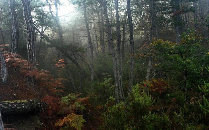 Υπέροχες εικόνες από το δάσος της Δαδιάς στον Έβρο – Newsbeast