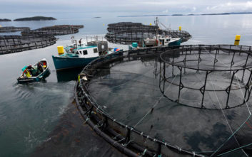 Τοξικό φύκι αποδεκατίζει εκατομμύρια σολομούς εκτροφής στη Νορβηγία