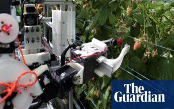To πρώτο στον κόσμο ρομπότ που μαζεύει σμέουρα