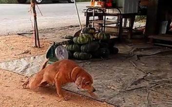 Ο πιο θεατρίνος σκύλος που έχετε δει