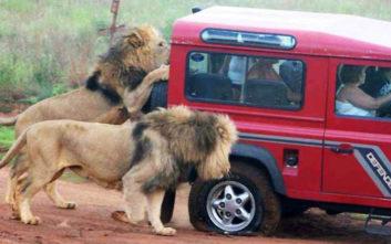 Ζώα εναντίον μέσων μεταφοράς