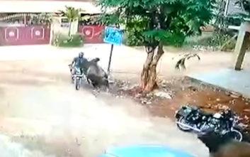 Μαινόμενος ταύρος πέφτει πάνω σε μοτοσικλετιστή και εκείνος την γλιτώνει