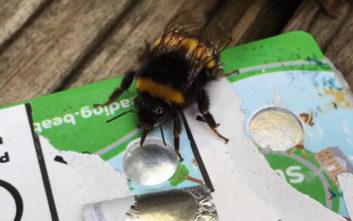 Τι σχέση μπορεί να έχουν οι πιστωτικές κάρτες με τις… μέλισσες