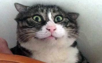 Ίσως ο πιο εκφραστικός γάτος που έχετε δει