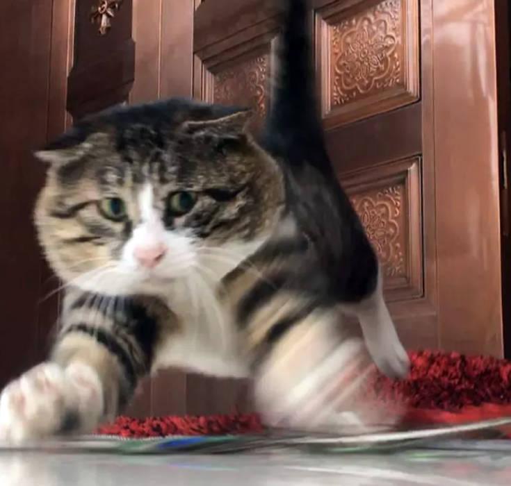 Ίσως ο πιο εκφραστικός γάτος που έχετε δει – Newsbeast