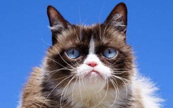 Grumpy Cat: Πέθανε η διασημότερη γάτα του κόσμου