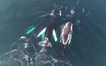 Εκπληκτικό βίντεο με φάλαινες και δελφίνια να παίζουν στις ακτές της Ιρλανδίας