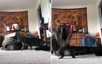 Τα πήρε άσχημα η γάτα, επιτέθηκε επανειλημμένως στην αφεντικίνα της