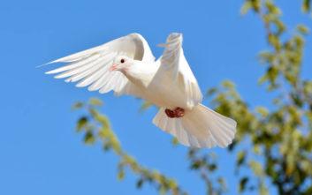 Το... Άγιο Πνεύμα έσωσε οδηγό από πρόστιμο για υπερβολική ταχύτητα