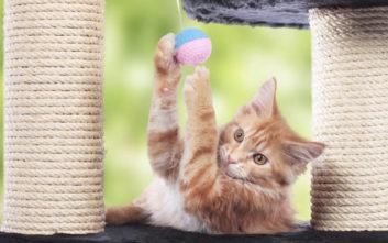 Ένας «παιδότοπος» για γάτες