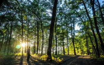 Μπορεί η φύτευση ενός τρισεκατομμυρίου δέντρων να μας σώσει από την κλιματική αλλαγή;