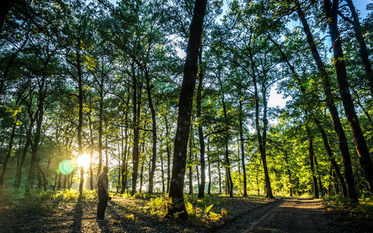 Ένα δάσος στην Ηλεία βγαλμένο από τις σελίδες παραμυθιού – Newsbeast