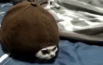 Η απόδειξη ότι οι γάτες δεν είναι συνηθισμένα κατοικίδια