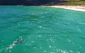 Ιρλανδοί είδαν καρχαρία επτά μέτρων στις ακτές της χώρας