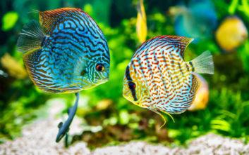 Ο χωρισμός πονάει και τα ψάρια, υποστηρίζουν ερευνητές