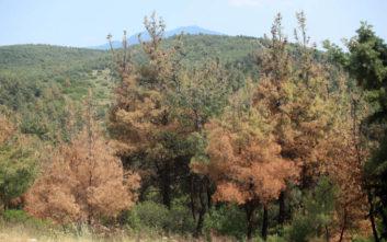 Απαγόρευση κυκλοφορίας πεζών και τροχοφόρων στο δάσος του Σέιχ Σου