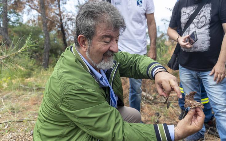 Ο λόγος που το «έντομο-φονιάς» αναπτύχθηκε τόσο γρήγορα στα δέντρα της Θεσσαλονίκης