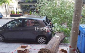Έπεσε δέντρο στο Κορδελιό, κόπηκε ο δρόμος στα δύο