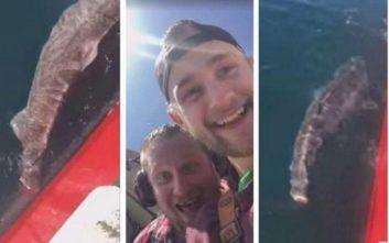 Ισλανδοί ψαράδες έκοψαν την ουρά καρχαρία για την πλάκα τους