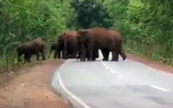 Η συγκινητική στιγμή που ένα κοπάδι ελέφαντες κηδεύει ένα ελεφαντάκι