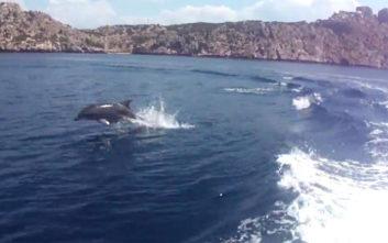 Μοναδικές εικόνες με δελφίνια στην Κορινθία