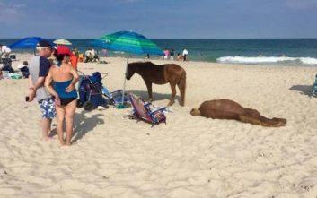 Το καλοκαίρι έφτασε και οι παραλίες γέμισαν ευτράπελα