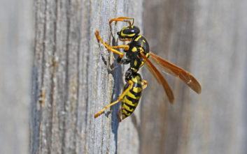 Τουρίστρια πέθανε από τσίμπημα σφήκας στην Κεφαλονιά
