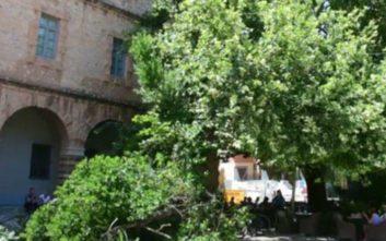 Πτώση δέντρου στην πλατεία Συντάγματος στο Ναύπλιο