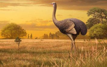 Ανακαλύφθηκαν γιγάντια πουλιά που ζούσαν πριν ενάμισι εκατομμύριο χρόνια