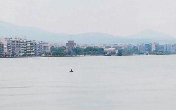 Δελφίνια εμφανίστηκαν στον Θερμαϊκό