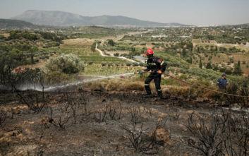 Φωτιά ξέσπασε στον δήμο Μαραθώνα
