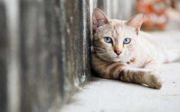 Εκπαιδευτικός τιμωρήθηκε με φυλάκιση και πρόστιμο για πυροβολισμό γάτας στη Λαμία